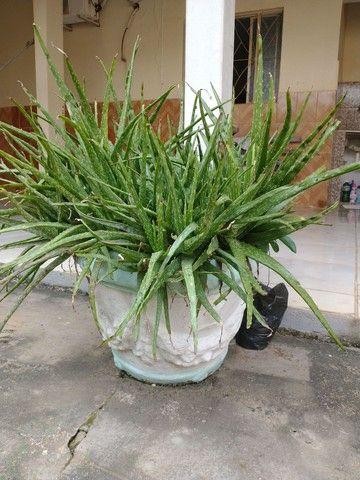 Vaso de planta. - Foto 3