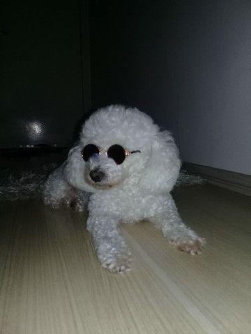 Óculos de sol para cães e gatos - Foto 2