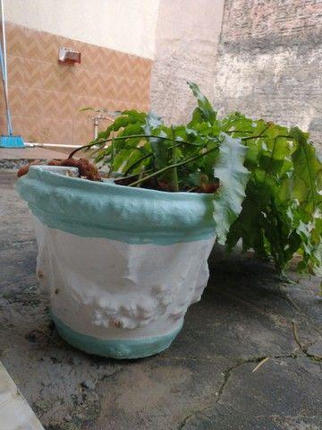 Vaso de planta.