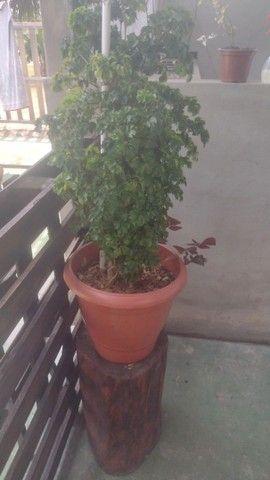 Plantas com vasos