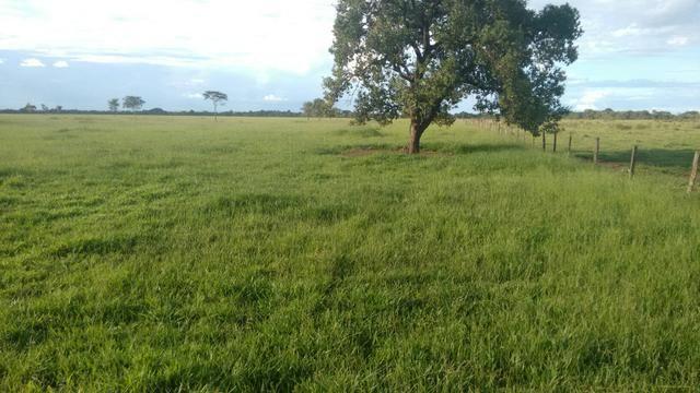 Fazenda em Goiás para dupla aptidão