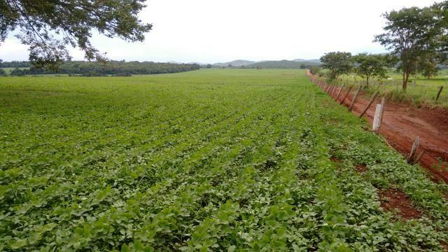 Fazenda com 64 Alq para agricultura e pecuária