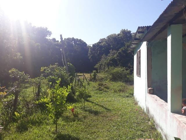 :Cód: 21 Mini Sítio (Área Rural) - em Tamoios - Cabo Frio/RJ - Centro Hípico - Foto 5