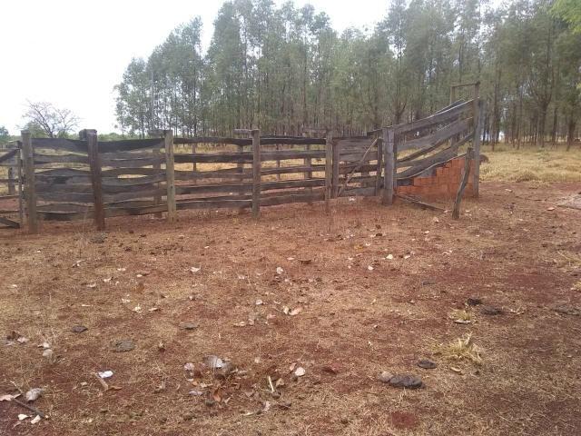 Fazenda Curral do fogo 23 hectares - Foto 2
