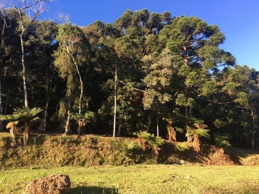Terreno amplo no belo condomínio Quinta da Serra - Foto 17