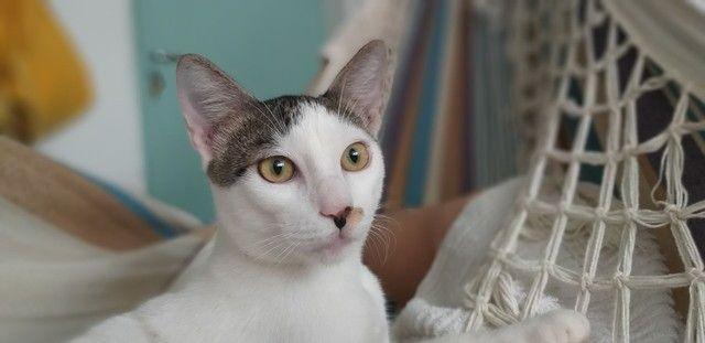 Adoção de gato macho resgatado  - Foto 3