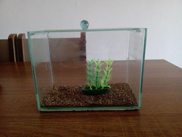 Mini aquário de 3 litros (brinde ração e anti cloro) - Foto 3