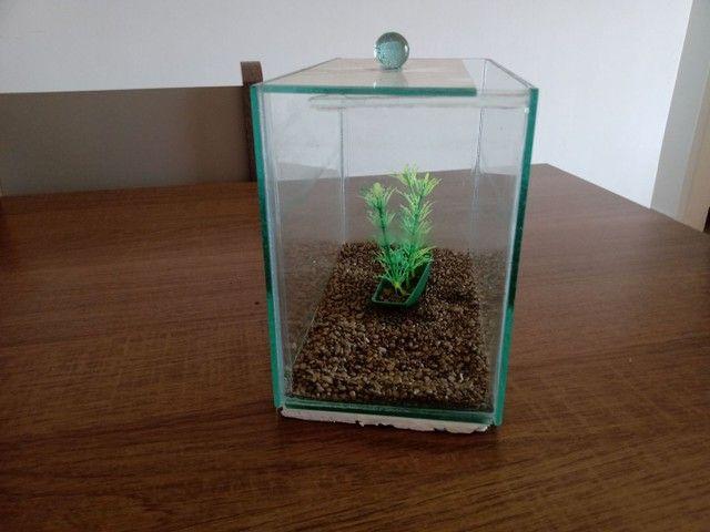 Mini aquário de 3 litros (brinde ração e anti cloro) - Foto 2