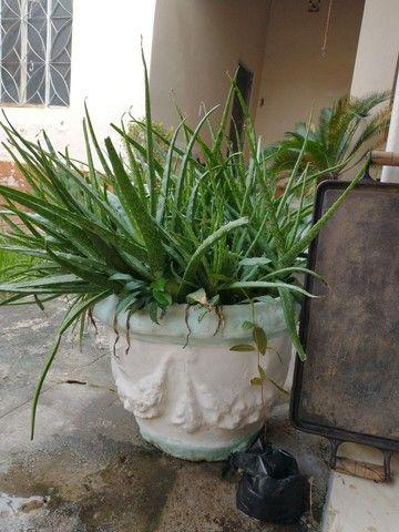 Vaso de planta. - Foto 2