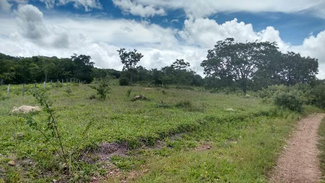 Fazenda de 31 alq proximo Goiânia
