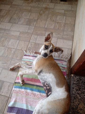 Doa-se cachorra 6 meses