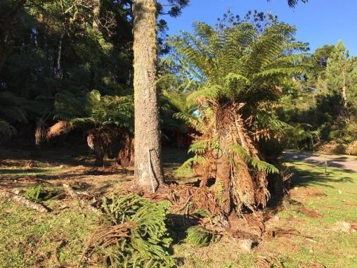 Terreno amplo no belo condomínio Quinta da Serra - Foto 11