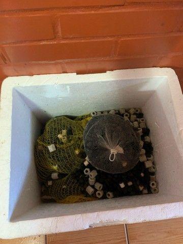 Midias de cerâmica para aquário  - Foto 3