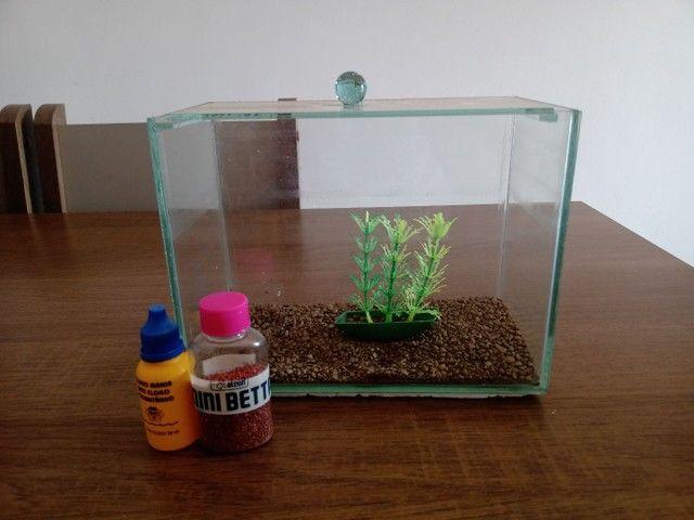 Mini aquário de 3 litros (brinde ração e anti cloro)