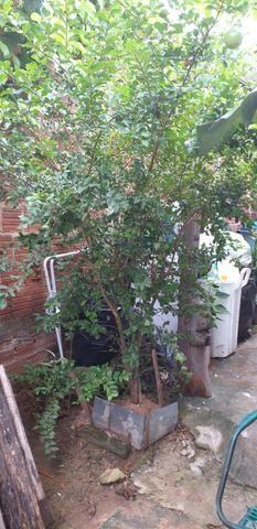Casa lajeada solta de esquina na quinta etapa de rio doce - Foto 11