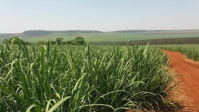 Fazenda 41 alqueires em Brodowisk 4.300.000.00 - Foto 3