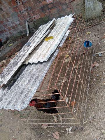 Arejadores de ferro para galos - Foto 6