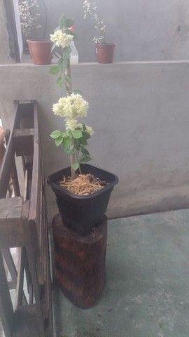 Plantas com vasos - Foto 5