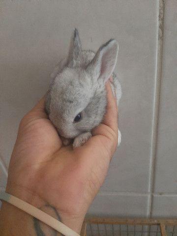 Vende se filhote de coelhos - Foto 3
