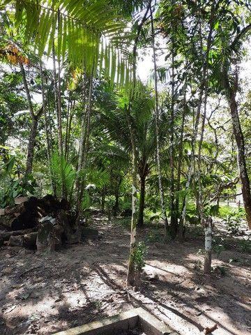 Vendo um sítio em Boa Vista. Curuça.55.000 - Foto 10