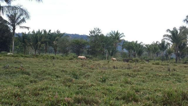 1.200 hectares, com 840 aberto Trairão -PA