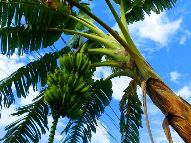 Bananeiras - Foto 3