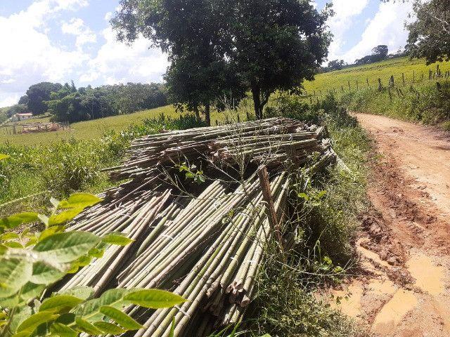 Compro moita de bambu cana da india - Foto 6