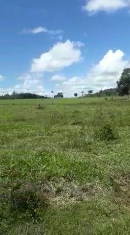130 alqueires, com 75 aberto 38 km de Guarantã do Norte -MT