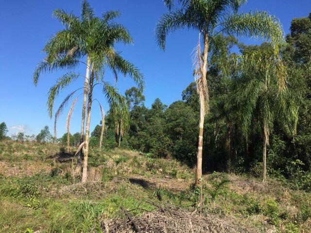 Chácrinha a 8 km do centro de Estância Velha - Foto 2