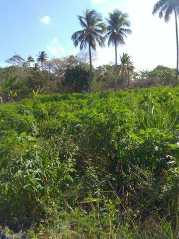 Sitio formado com toda infraestrutura, Zona Rural 65km de Recife - Foto 14