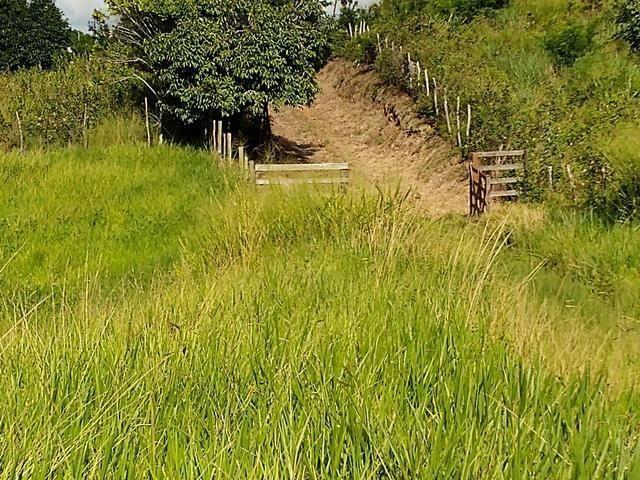 9 hectares nas Margens da BR 232 a 25 km de Recife PE - Foto 5