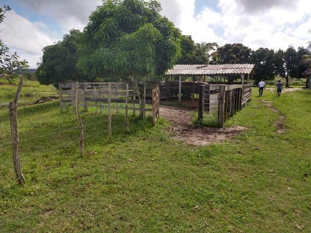 9 hectares nas Margens da BR 232 a 25 km de Recife PE - Foto 6
