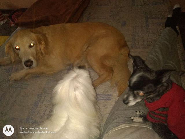 Hospedagem para cachorro - Foto 3