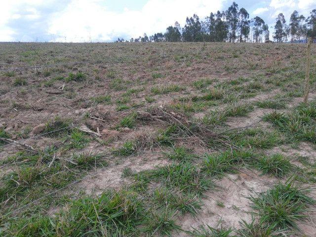 Fazenda em capetinga 92 alqueires 5.000.000.00 - Foto 3