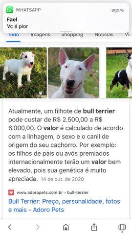 Filhote de bull terrier fêmea - Foto 3