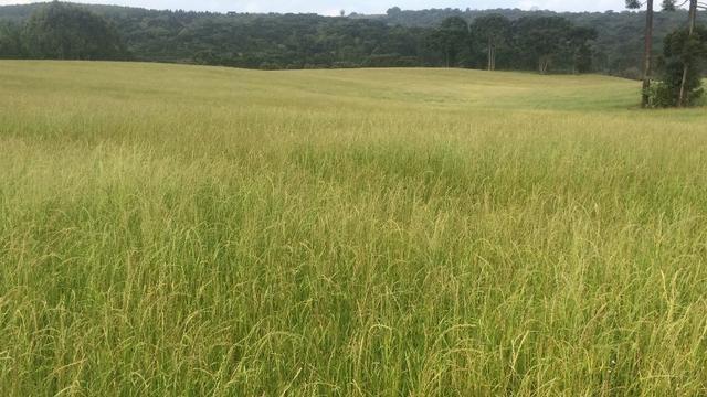 Fazenda agricultura ou pecuária 63 hec