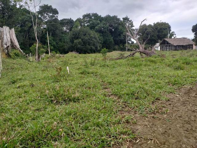 Vendo sitio em Apuarema ba - Foto 4