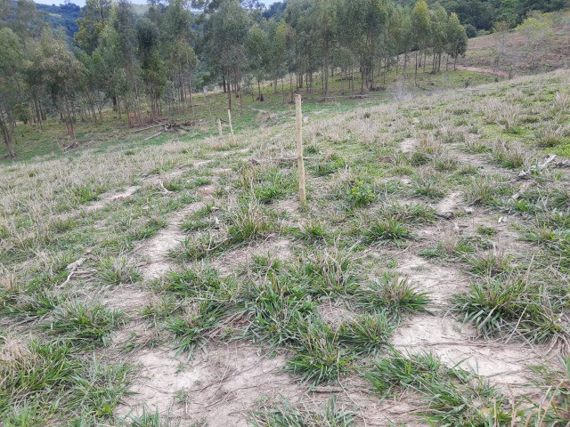 Fazenda em capetinga 92 alqueires 5.000.000.00 - Foto 5