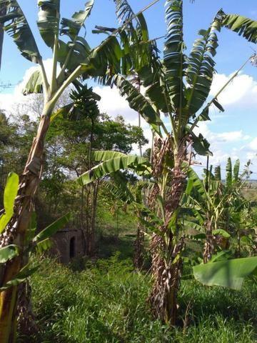 Sitio formado com toda infraestrutura, Zona Rural 65km de Recife - Foto 4
