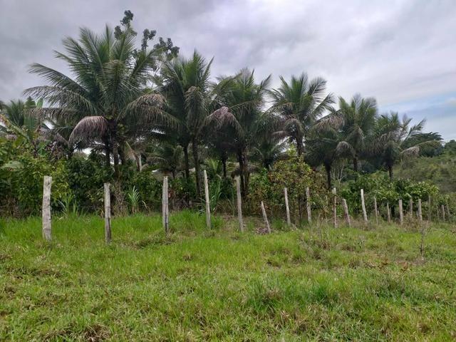 Vendo sitio em Apuarema ba - Foto 2