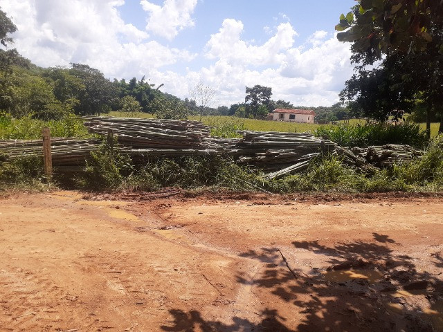 Compro moita de bambu cana da india - Foto 2
