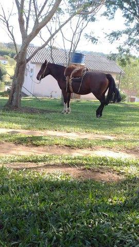 Égua Colorada marcada  - Foto 2