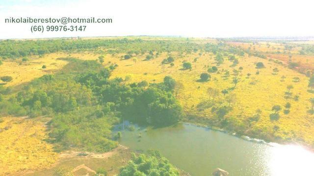 Fazenda 970 hectares vale do xingu mt nikolaiimoveis