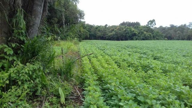 Fazenda 125 alqueires agricultura ou pecuária