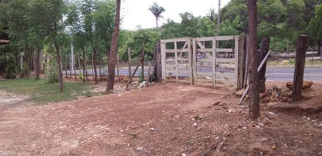 Vendo Sitio no Povoado Felicidade Municipio de Jose de Freitas - Foto 3