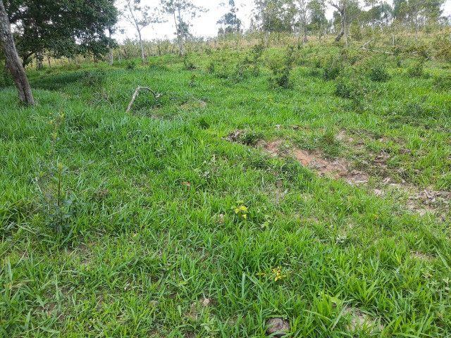Fazenda em capetinga 92 alqueires 5.000.000.00 - Foto 13