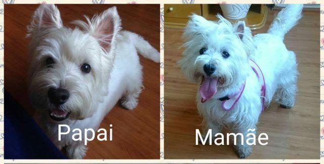 Reserva Filhote de -> West Highland White Terrier