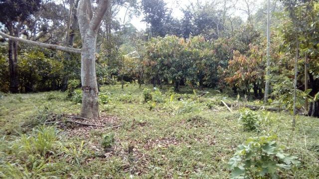 Terreno Rodovia Itabuna- Ilhéus - Foto 3