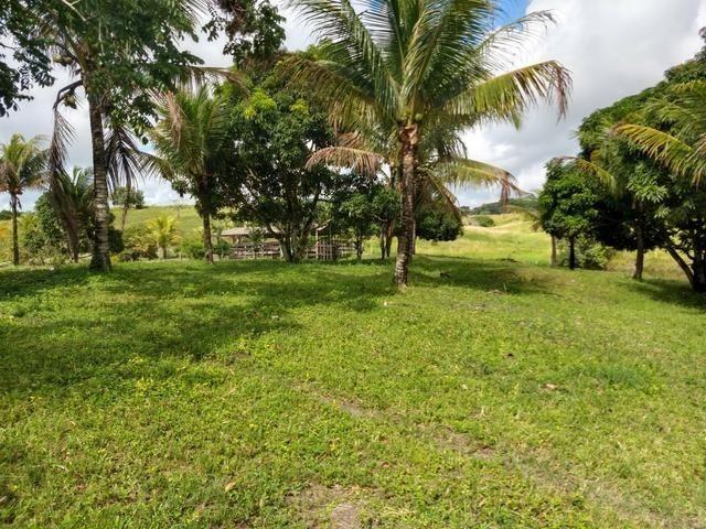 9 hectares nas Margens da BR 232 a 25 km de Recife PE - Foto 4
