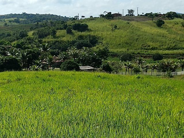 9 hectares nas Margens da BR 232 a 25 km de Recife PE - Foto 8